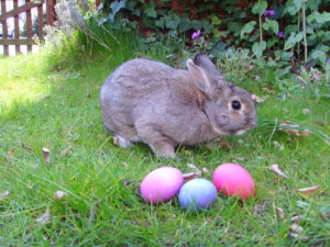 Happy Easter from Clare Island Adventures